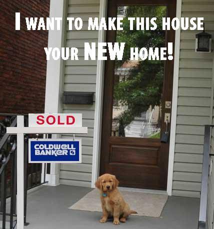 Dog_Sold.jpg