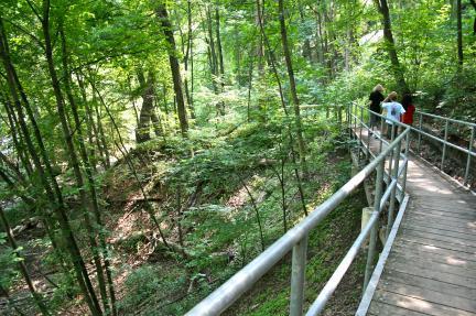 David A Balfour Park Trail