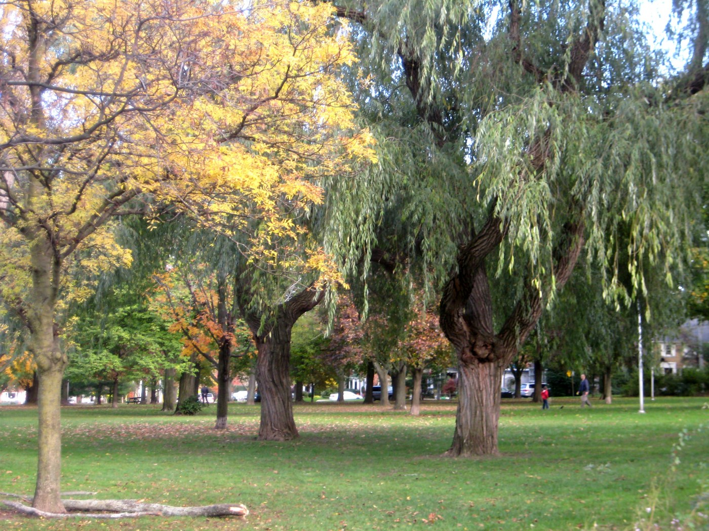 Wanless Park