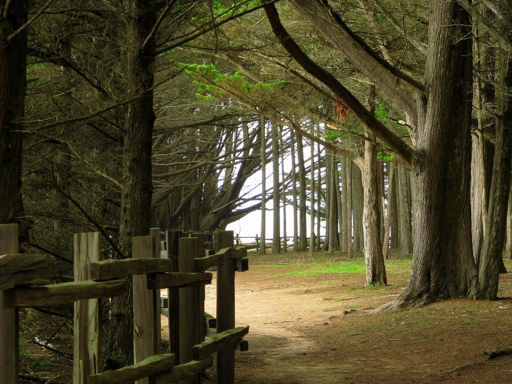 woods_Fitgerald.jpg