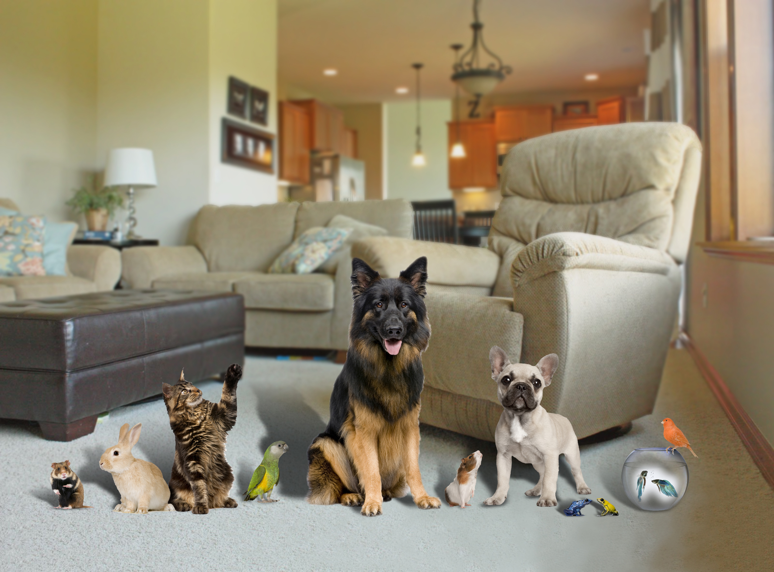 Best Dogs That Can Live With Cats